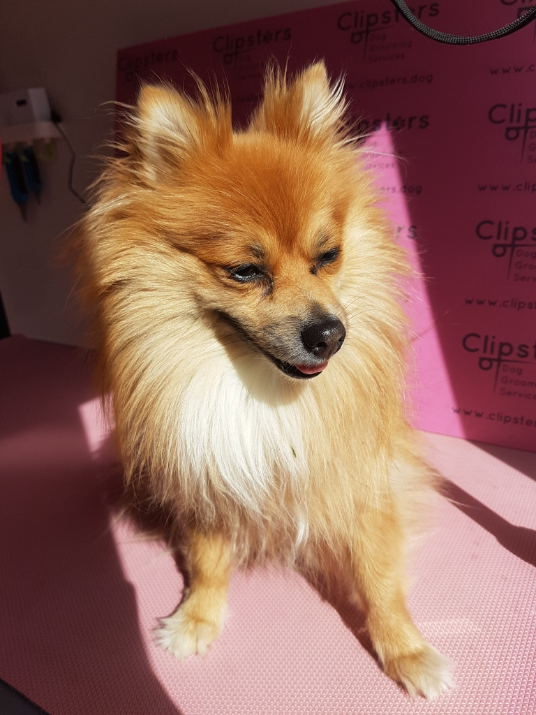 Clipsters of Walthamstow dog grooming customer photo